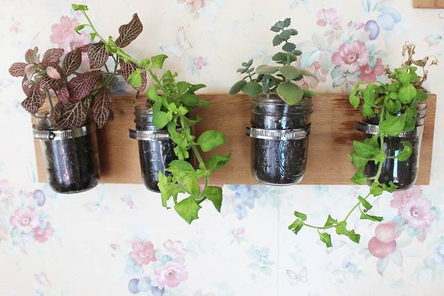 Best-Indoor-Hanging-Plants