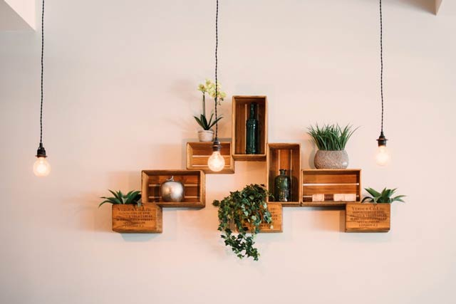 Best Hanging Indoor Plants For Home