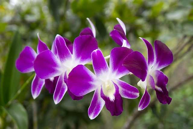 orchids hanging plants