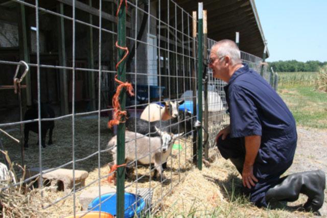Goat Proof Fence