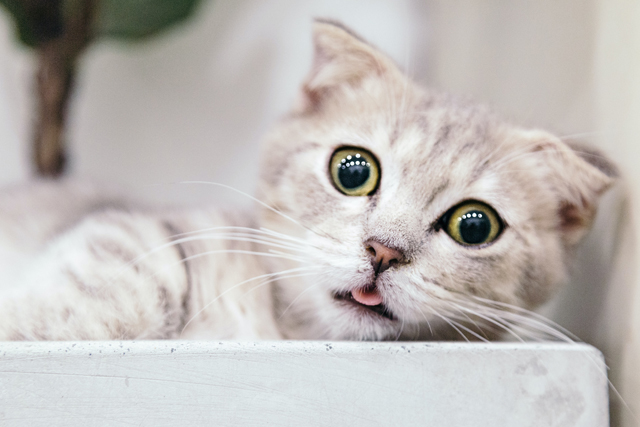 Why Cats Stopped Eating